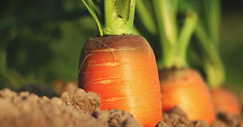 Conseils de jardinage et liste de choses à faire en juillet par zone de plantation et par région