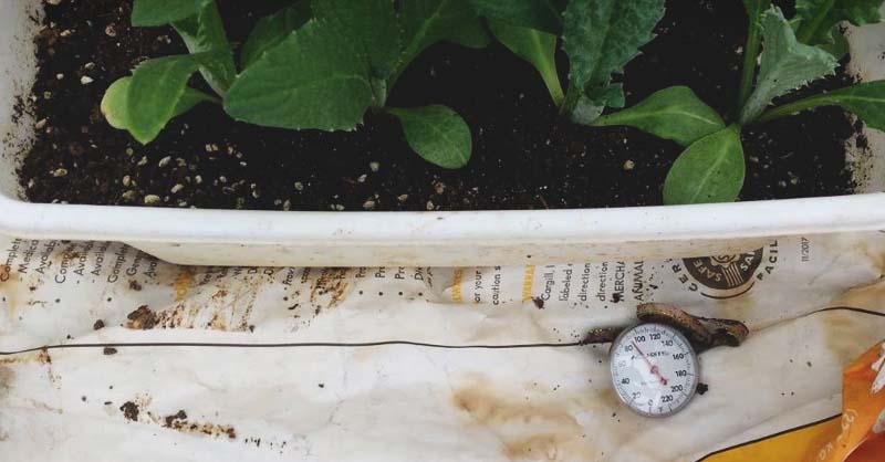 Ajoutez un peu de chaleur à votre répertoire de jardinage